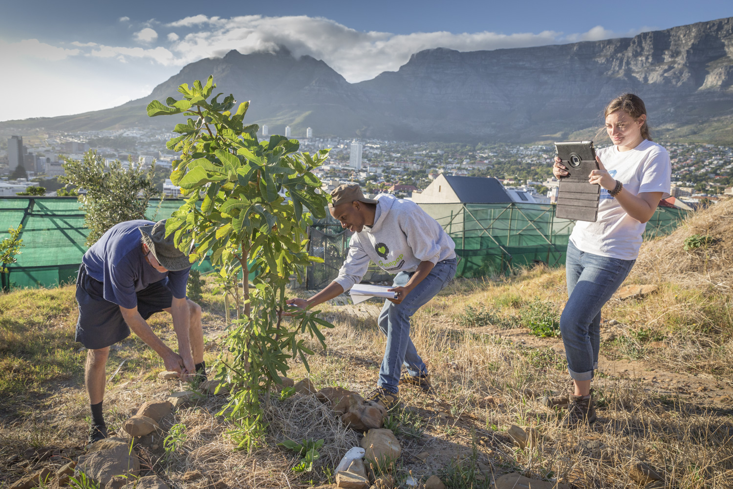 Ethiopian Trees Fight Climate Change